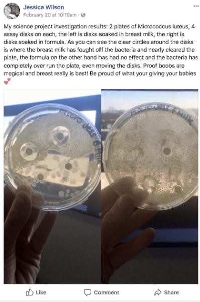 anyatej kísérlet baktérium