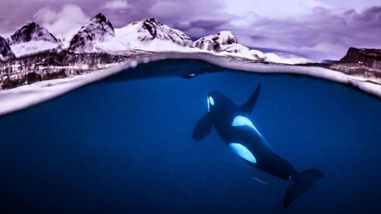 Az év vízalatti fotósa pályázat fotópályázat underwater photographer of the year