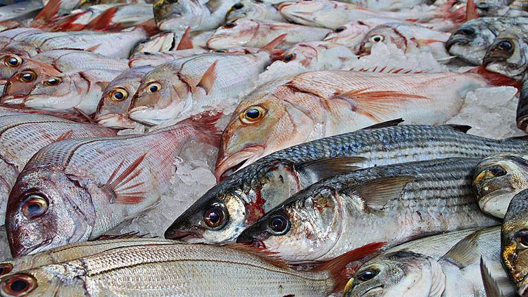 sok hal a tengerben randi kos férfi és halak nő randi