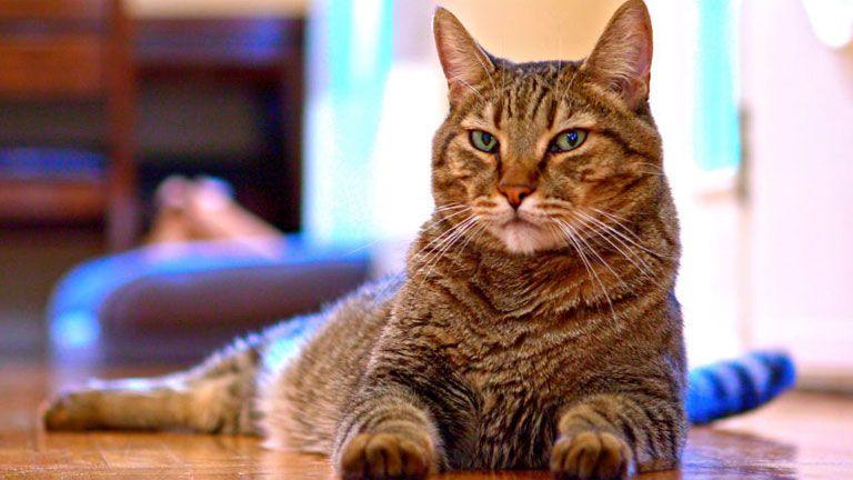 macska cicia diy háziállat