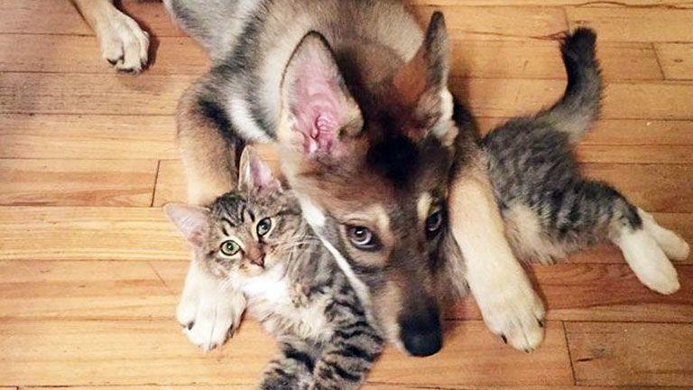 kutya macska cica barátság