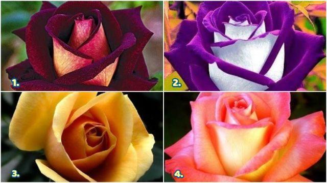 rózsák személyiség szerelem teszt