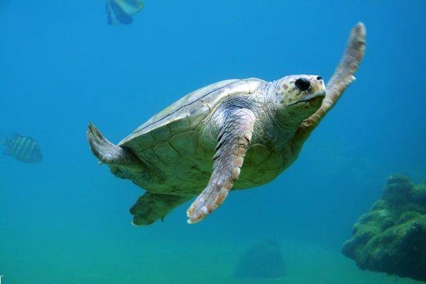 teknős