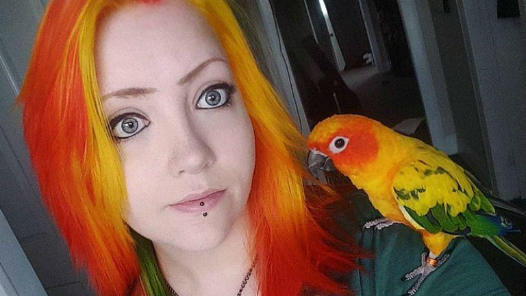 papagáj hajfestés