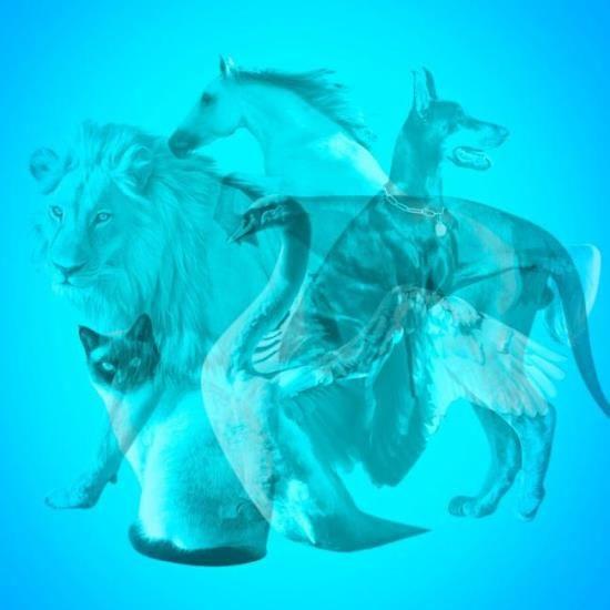 állat teszt személyiség önismeret vizsgálat