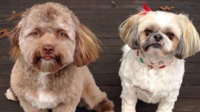 emberaerú kutya kutyus torz