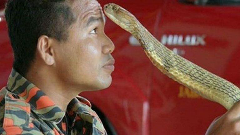 Péniszen harapta a vécéből előugró kígyó