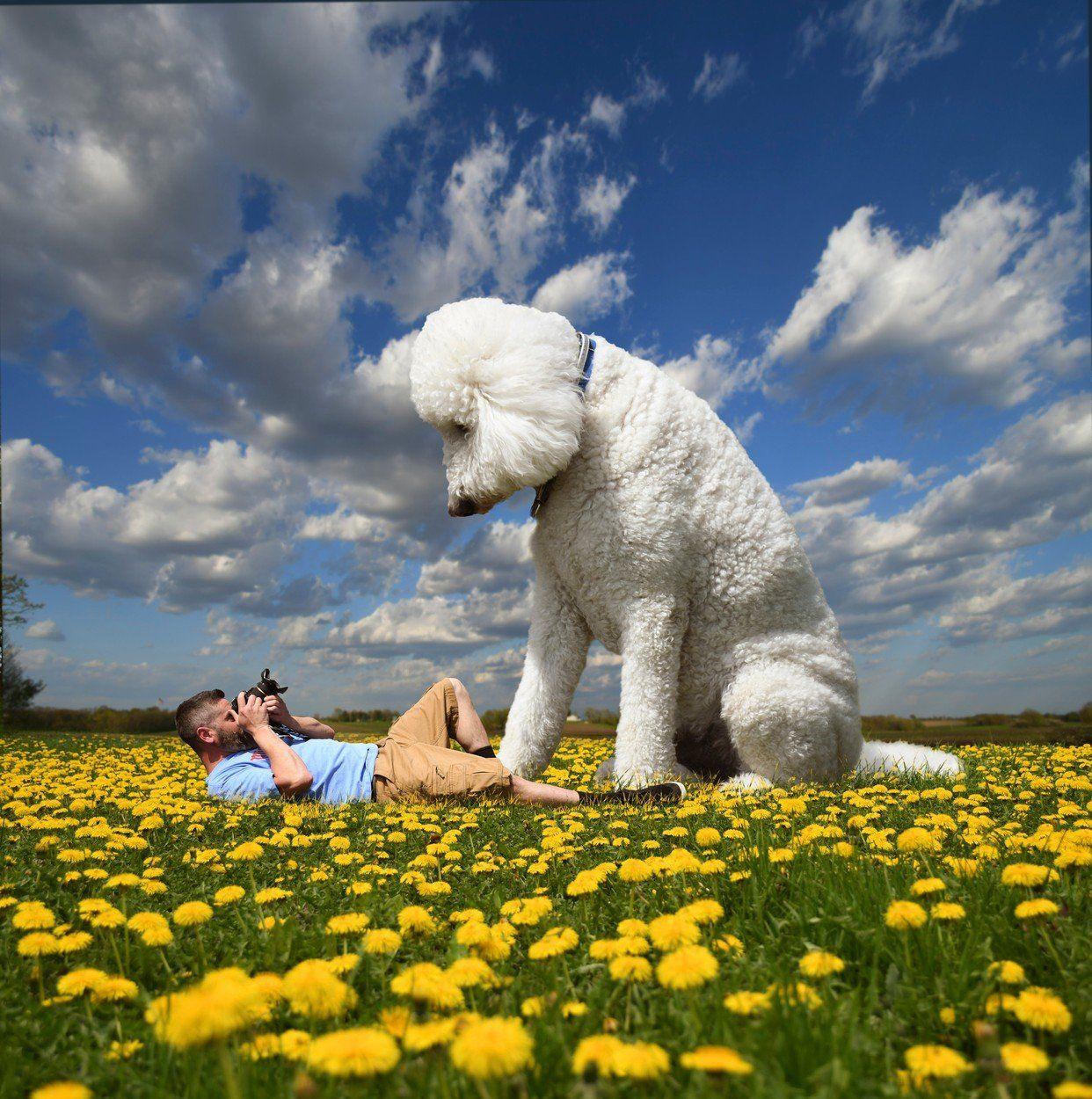 kutya nagy photoshop rét gazda