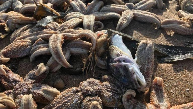 tengericsillag, anglia (fotó: London Mudlark Facebook)