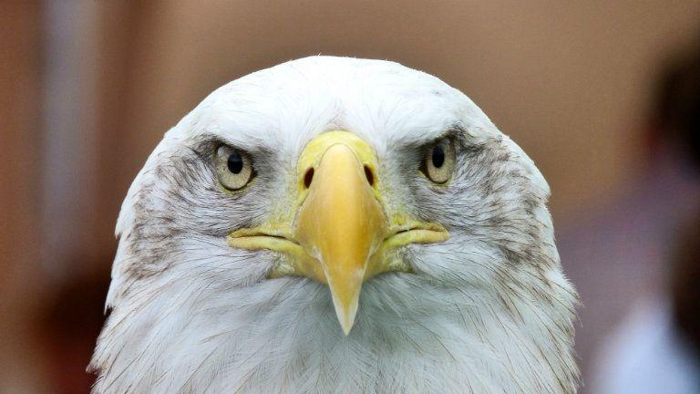 A sas azt jelenti, védve vagy. Képünk illusztráció. (Fotó: Pexels)