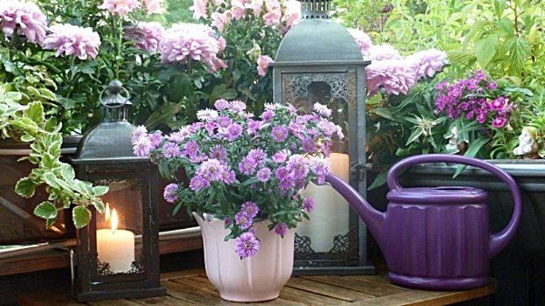 terasz, noveny, balkon, kerteszkedes