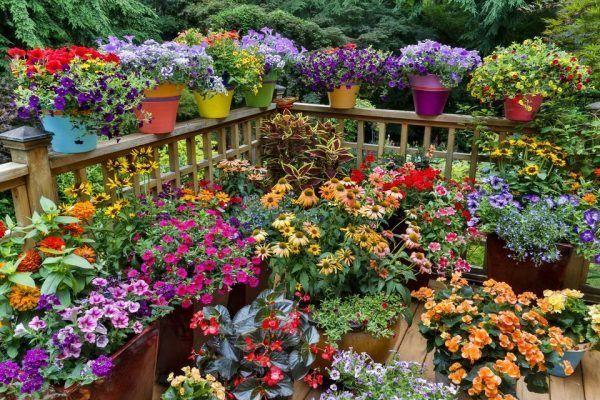 kert, kerteszkedes