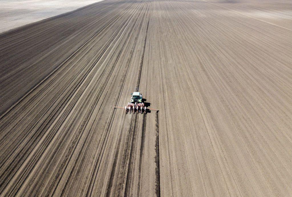 mezőgazdaság kukoricavetés kukorica extenzív növény termesztés