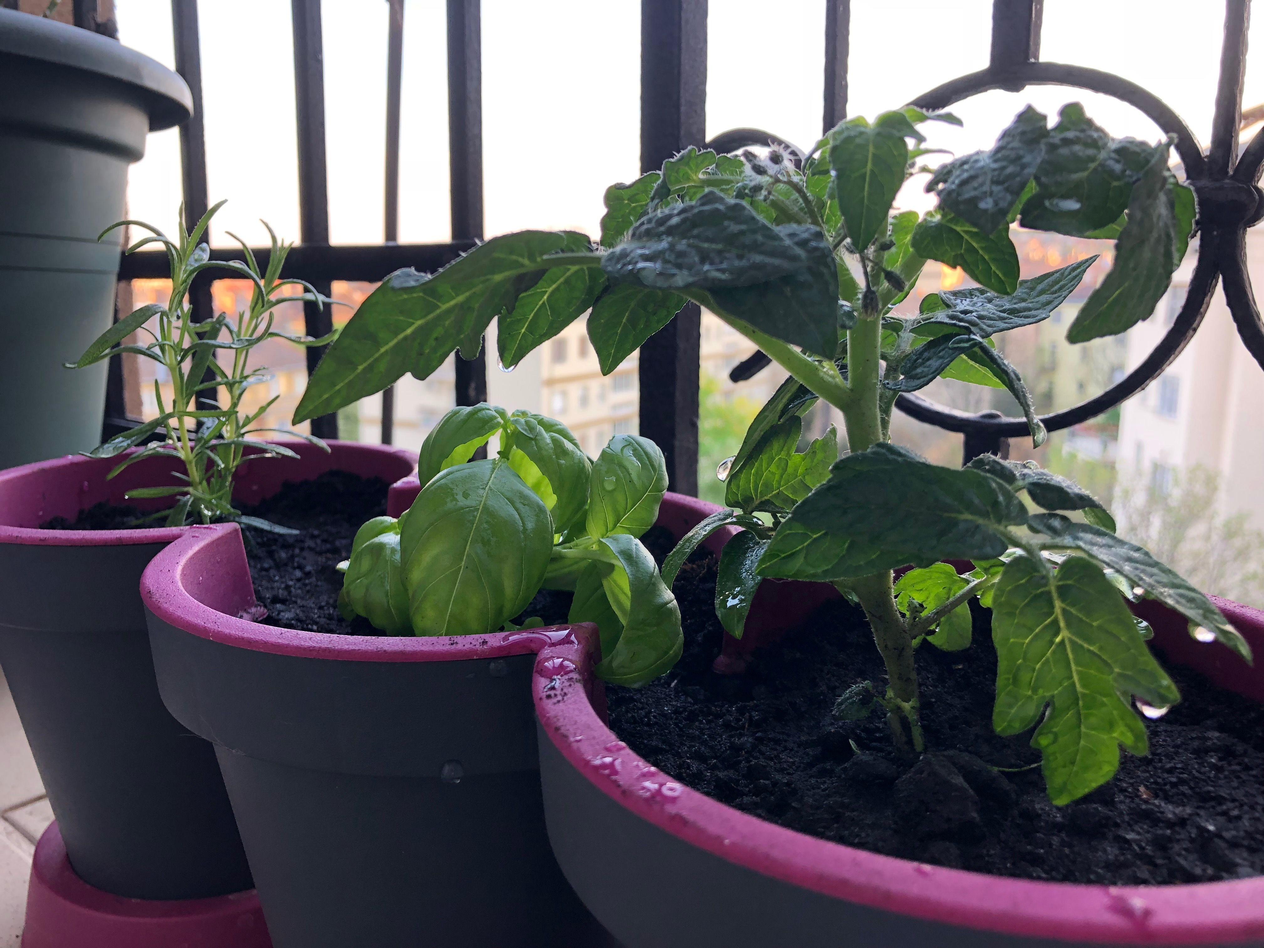 otthoni palantazas, kerteszkedes