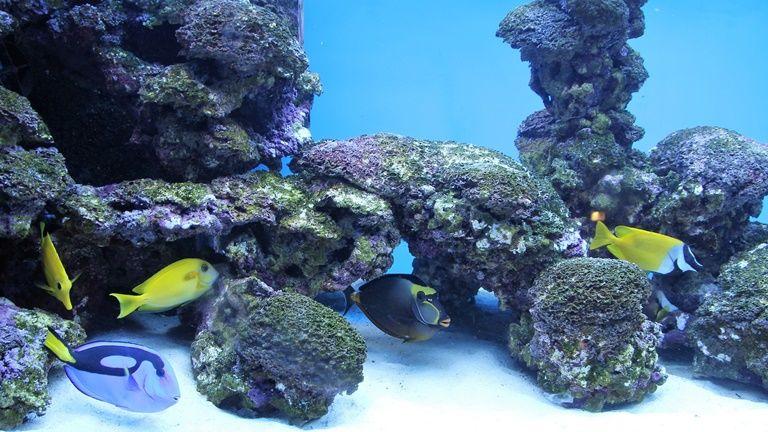 leszbikus akvárium