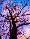 mágikus fák személyiség teszt