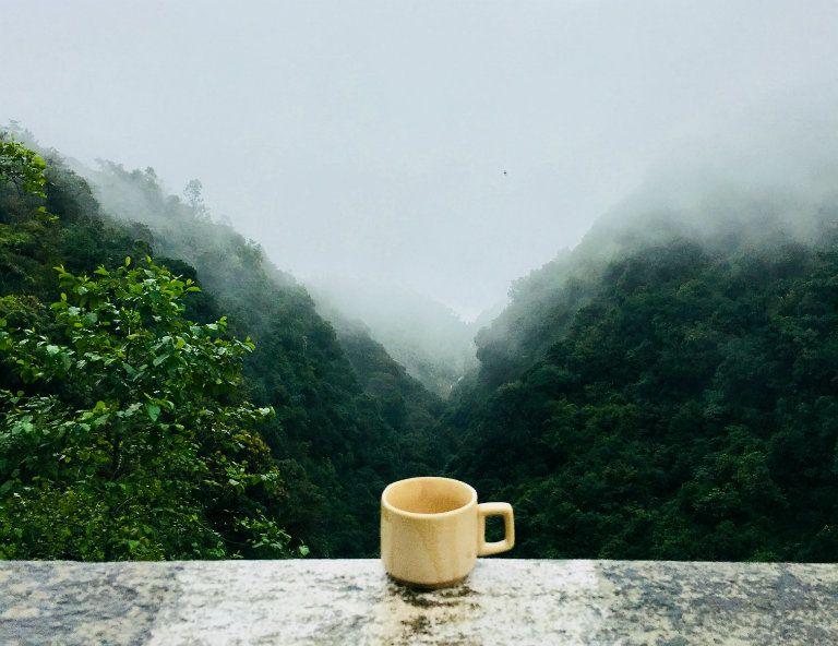 hideg fogyás tea)
