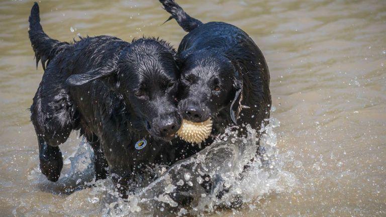 baráthegyi vakvezető kutya növendék tanulás