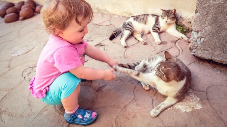 macska baba hasonlóságok