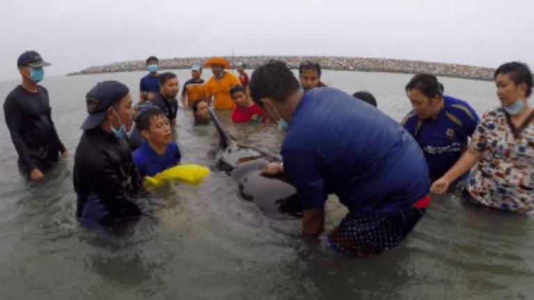delfin nejlonzacskó környezetszennyezés