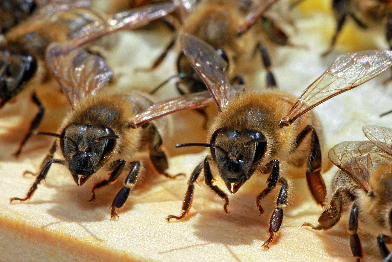 A darázs vagy a méh csípése rosszabb? Ezért fáj annyira! - Dívány