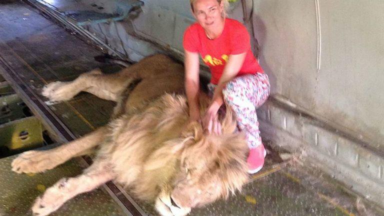 oroszlán támadás állatkert