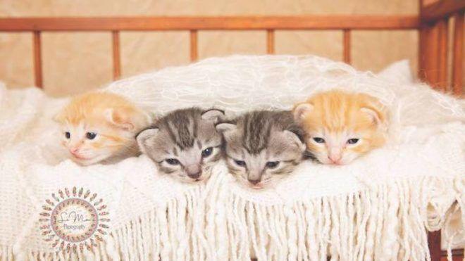 újszülött cica fogyás)