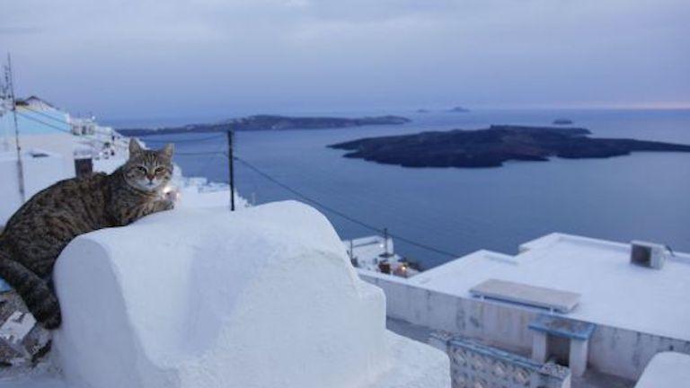 macska álommunka görög sziget