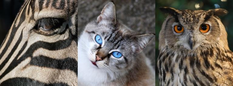 állat teszt személyiség tulajdonságok