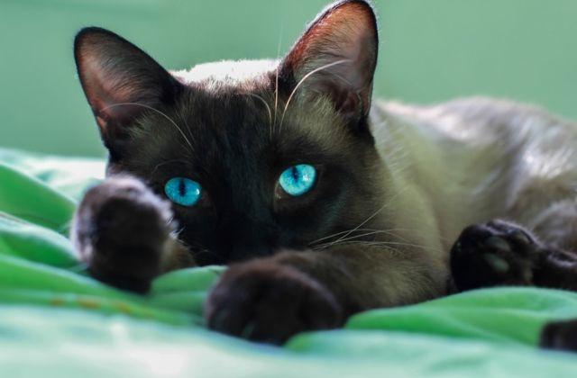 macska horoszkóp bika csillagjegy