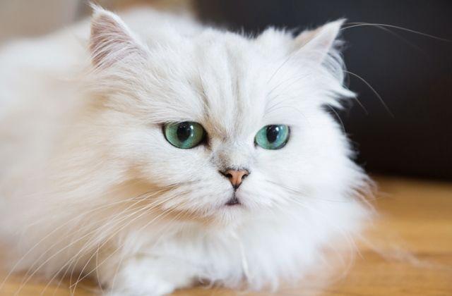 macska horoszkóp ikrek csillagjegy