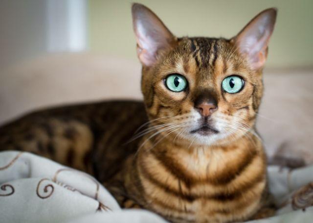 macska horoszkóp szűz csillagjegy