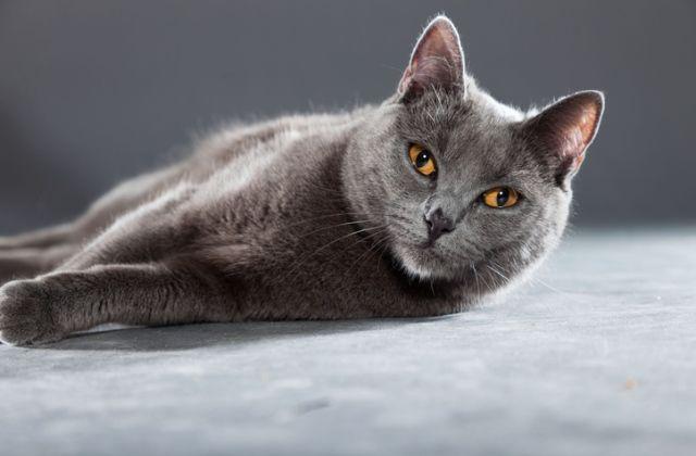 macska horoszkóp mérleg csillagjegy