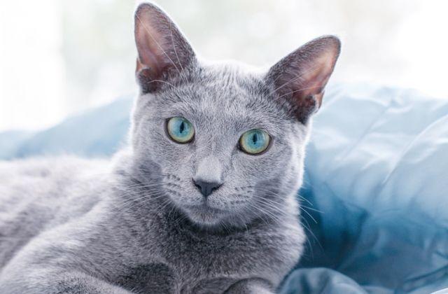 macska horoszkóp nyilas csillagjegy