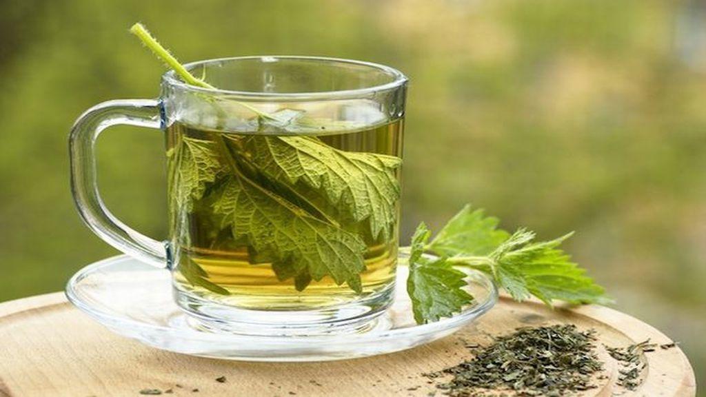 csalan tea