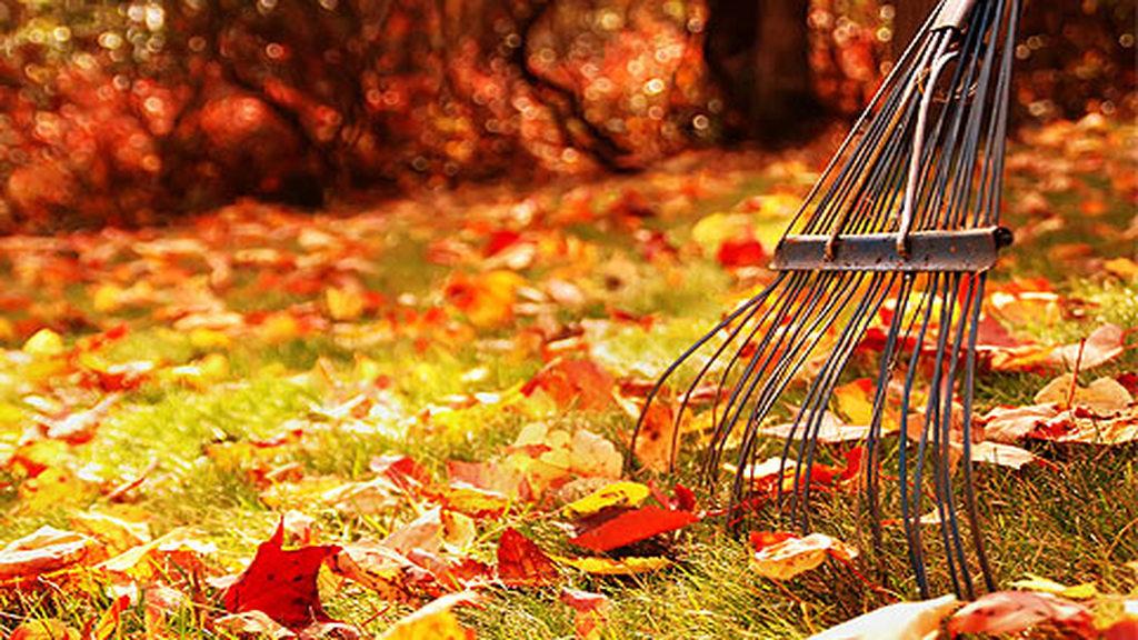 osz, október, kert
