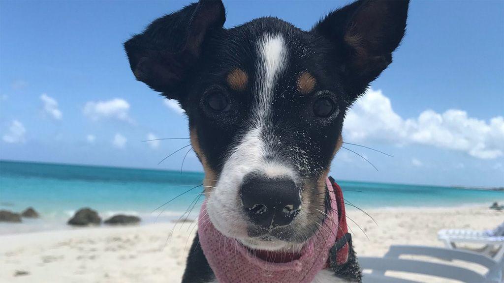 mentett kutyapardicsom ez a karibi sziget