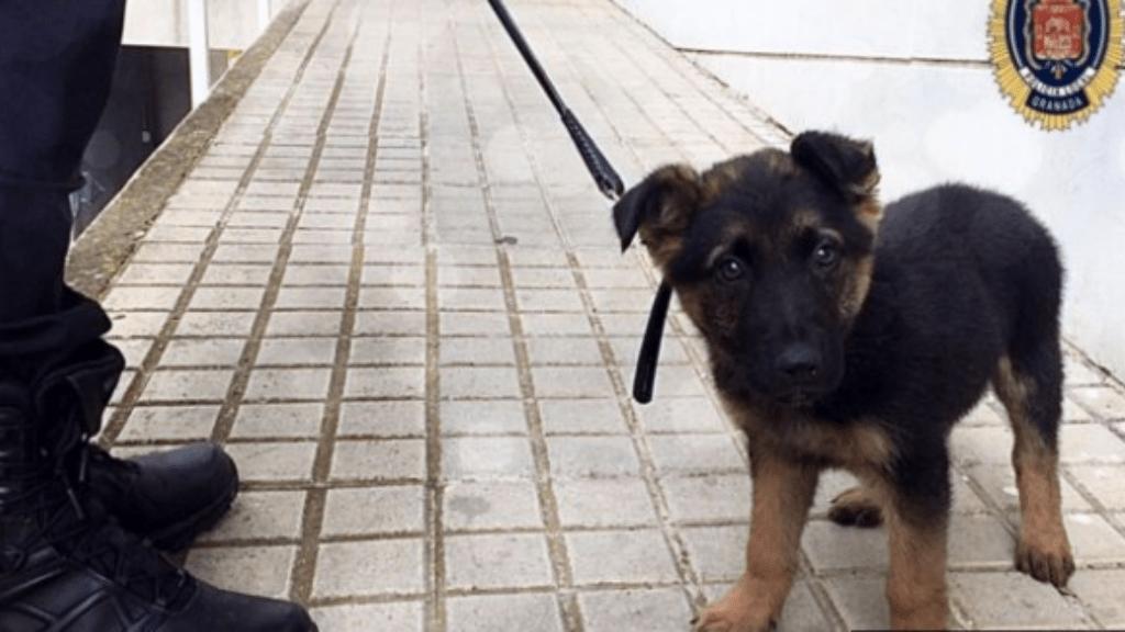 rendőrkutya granada spanyolország