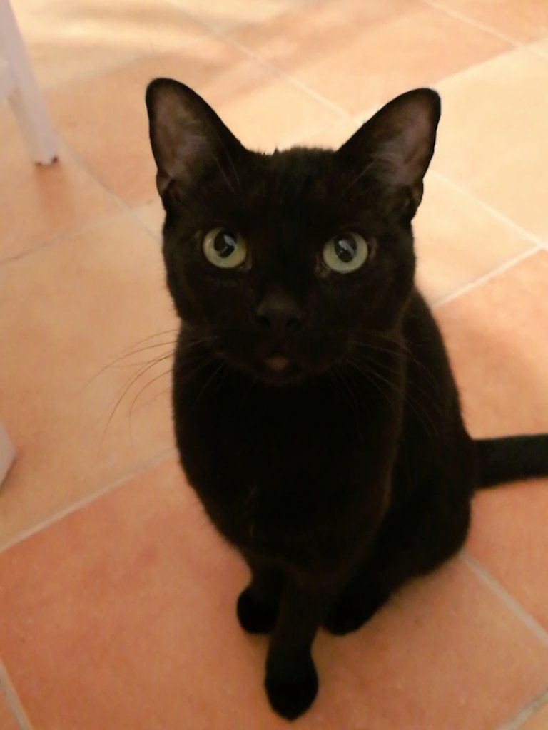macska gazda háziállat