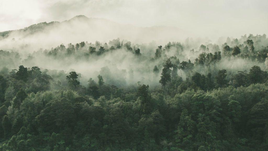 köd időjárás
