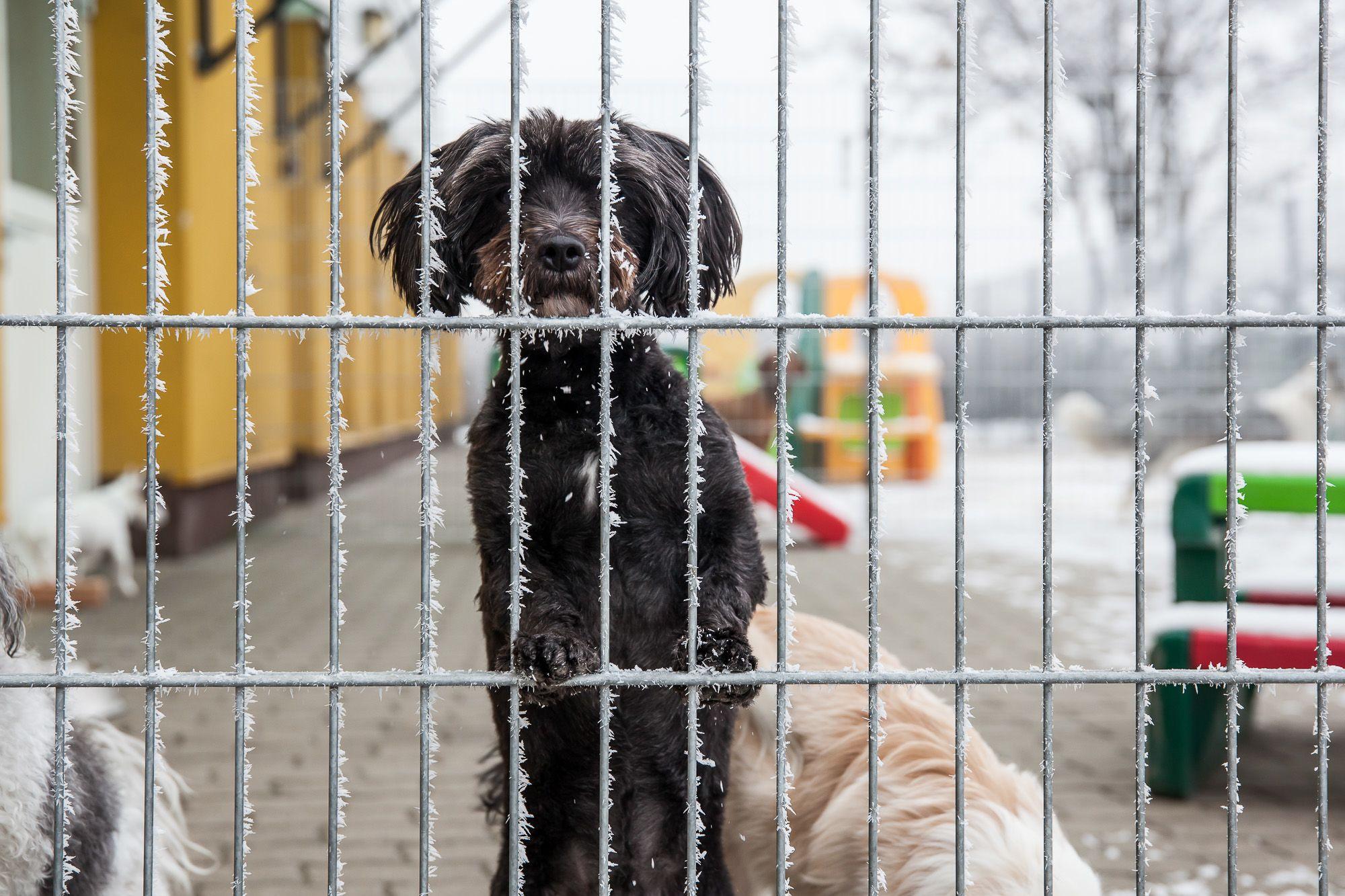 kutyapanzió - Fotó: Czvitkovits Judit