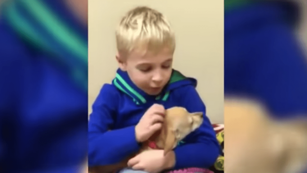 roman állatvédelem kutya állatmentés