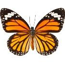 pillangó személyiségteszt céltudatos