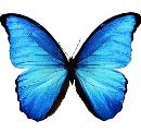 pillangó személyiségteszt kreativitás