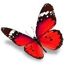 pillangó személyiségteszt logika