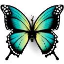 pillangó személyiségteszt béke