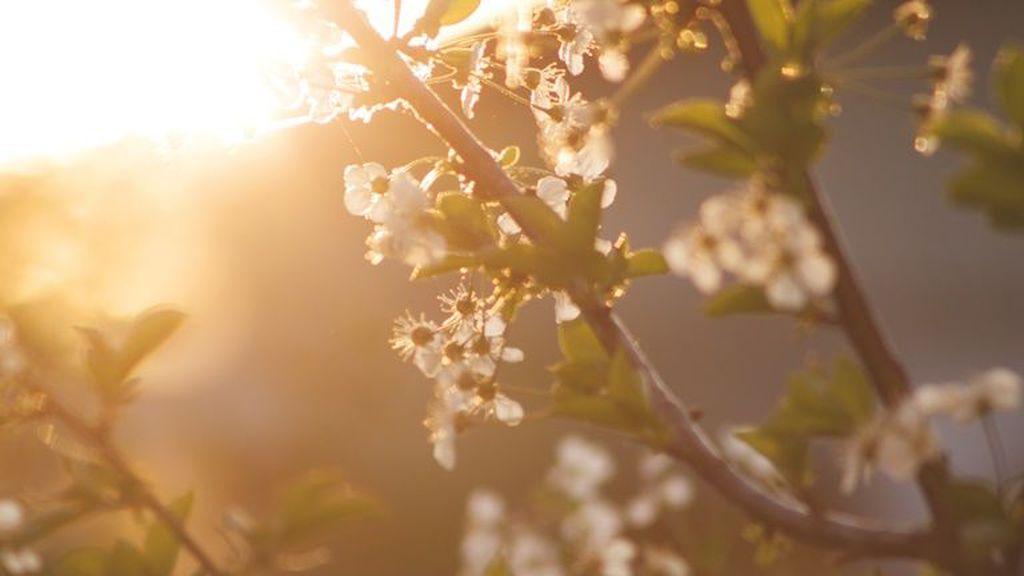 kert, tavasz
