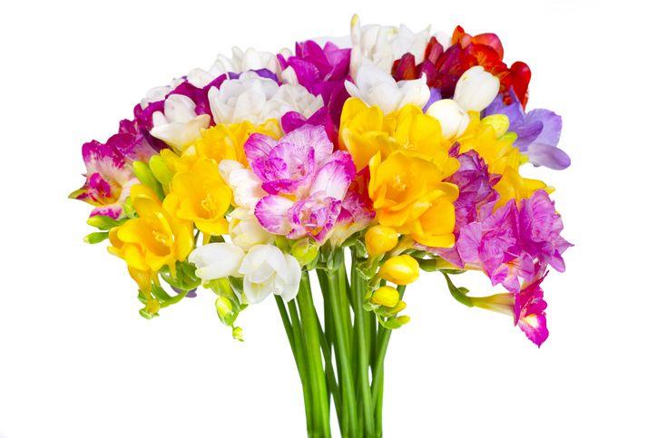virágok jóslat virágnyelv frézia