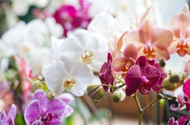 virágok jóslat virágnyelv orchidea