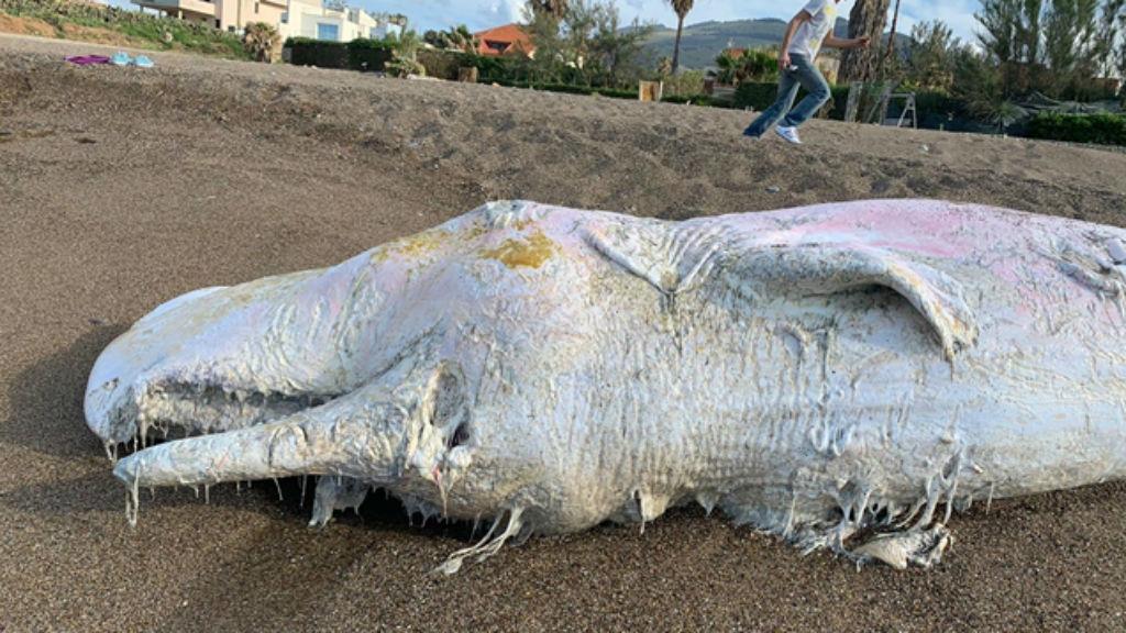 bálna környezetszennyezés műanyag